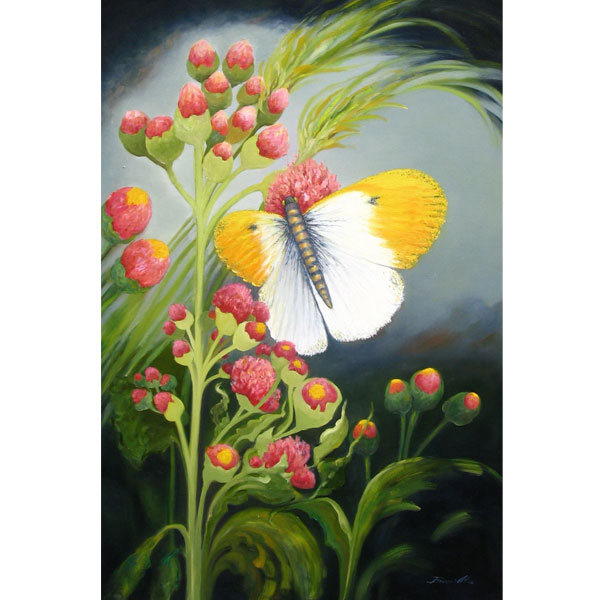 Butterfly 76x92cm- SOLD